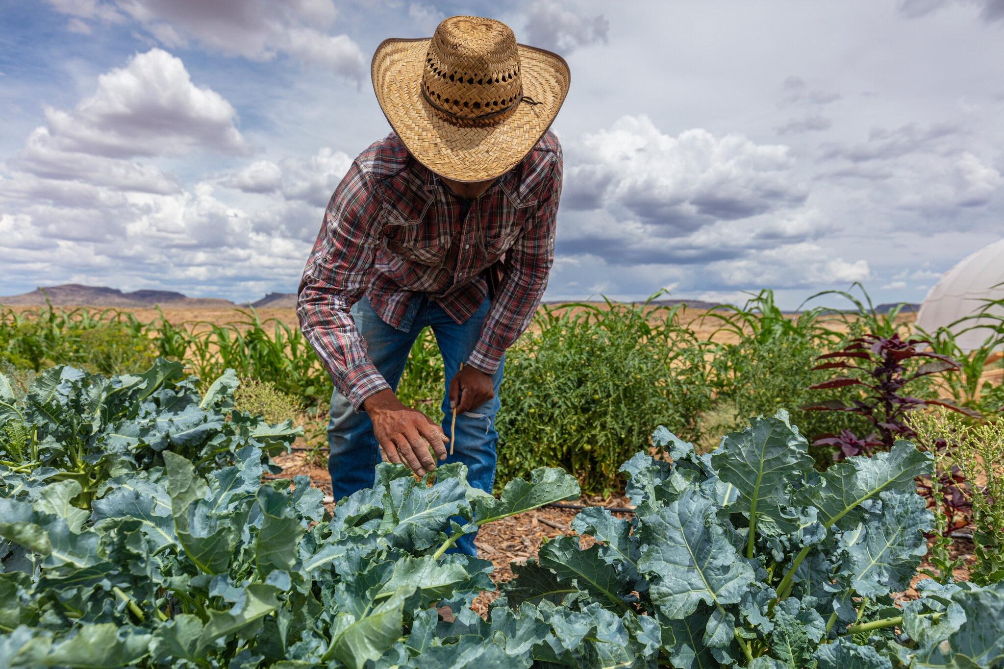 Artie Yazzie grows produce for his community in the Arizona section of the Navajo Nation. The determination of growers and gardeners like him keeps the food sovereignty movement alive.Credit...John Burcham for The New York Times